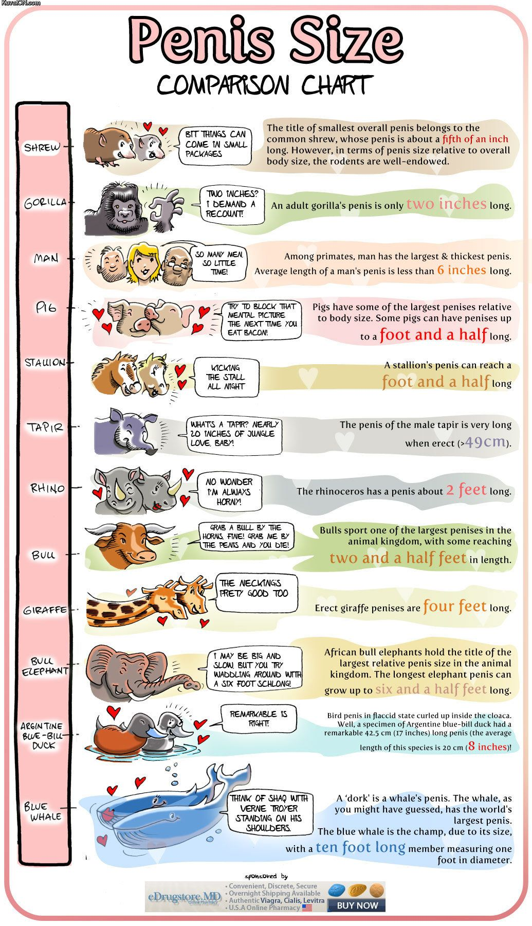 Animal penis size chart made me lol pinterest chart and animal penis size chart geenschuldenfo Choice Image