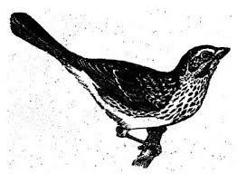 bird draw - Pesquisa Google
