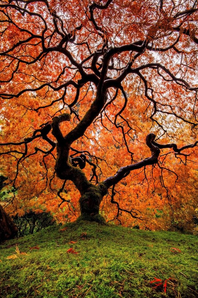Most Beautiful Trees in the World - Top Ten List |Beautiful Japanese Trees