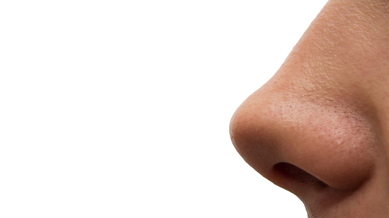 Five genes give your nose its shape: GLI3 PAX1 DCHS2 RUNX2 EDAR