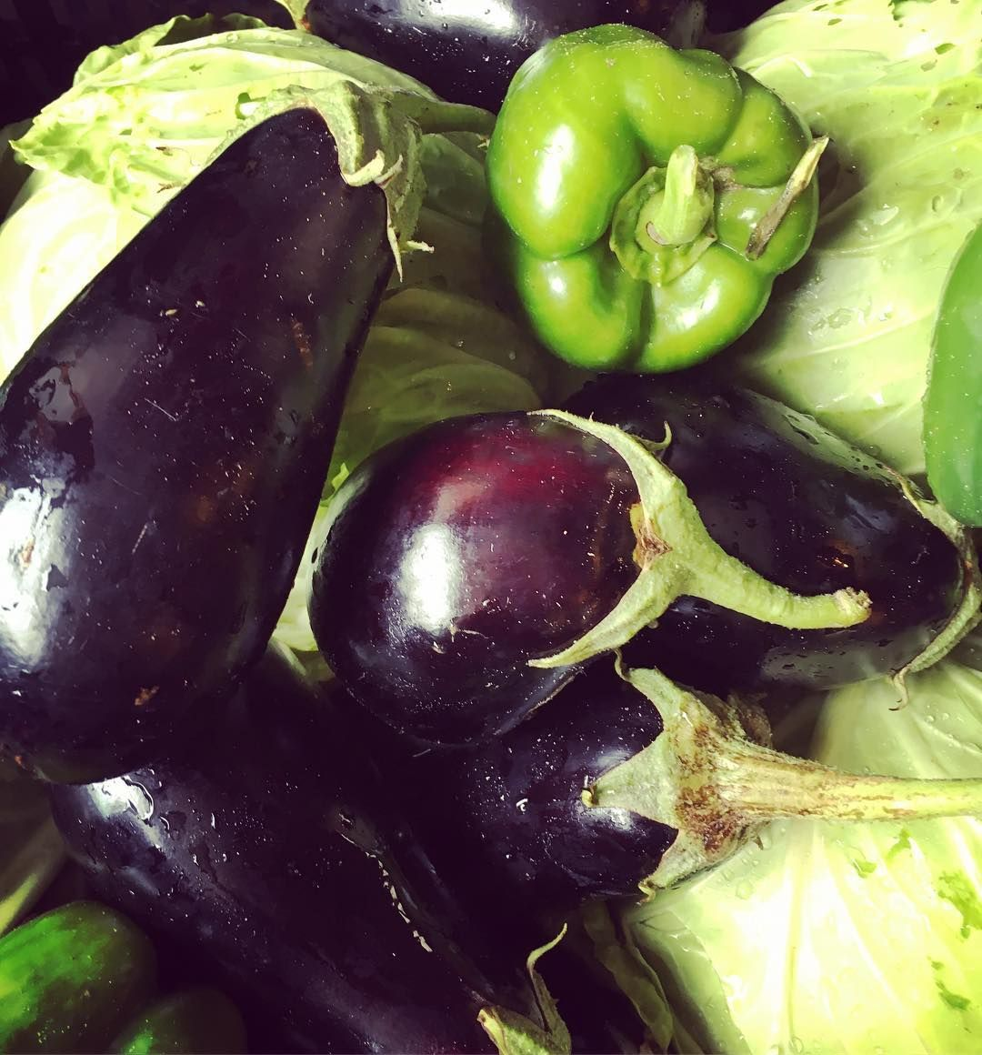 Hey Organic Bin Peeps the organic eggplant was a little on the small side this morning so we are adding an organic green pepper on us  enjoy