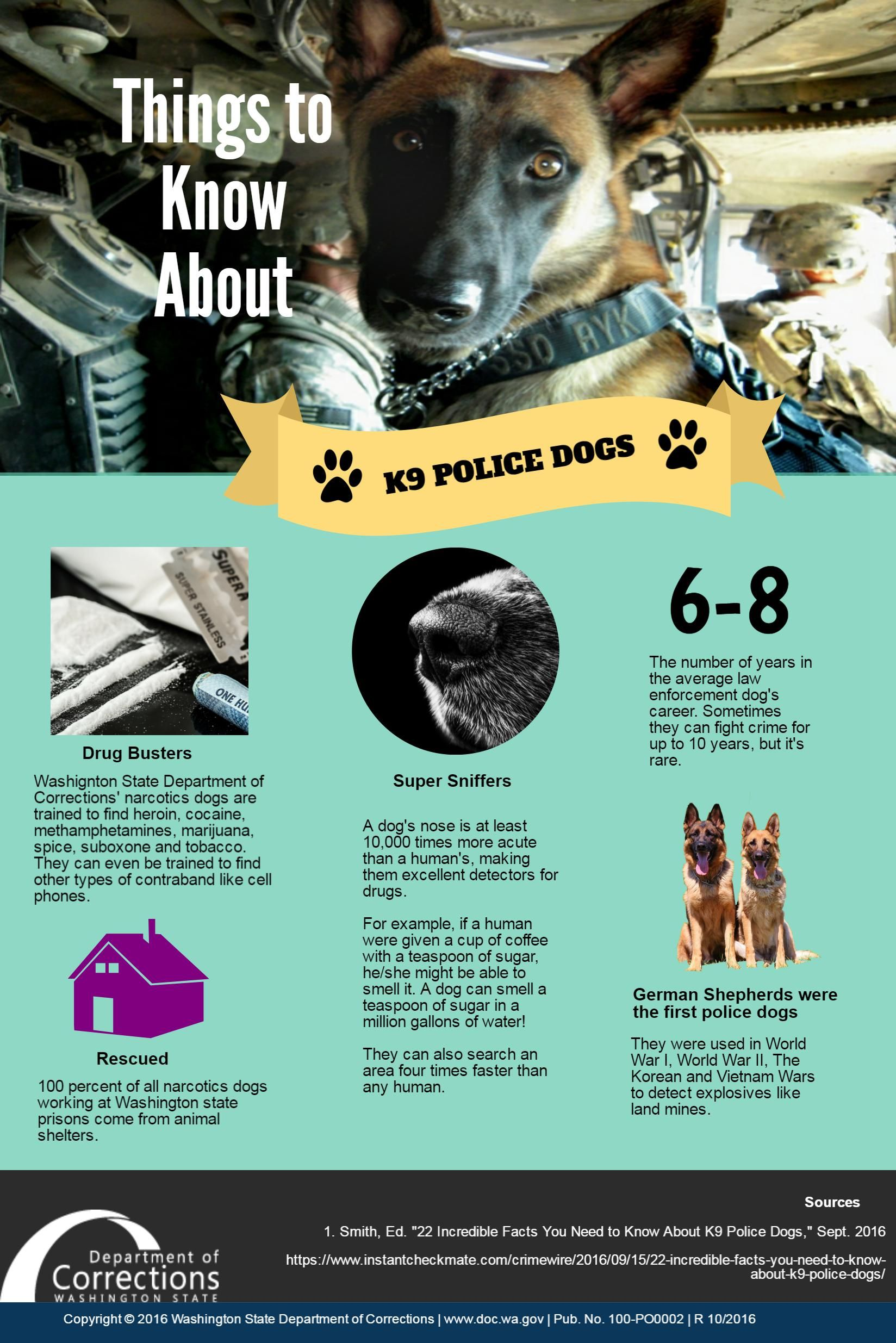 Image Result For Sniffer Dog Infographic Police Dogs