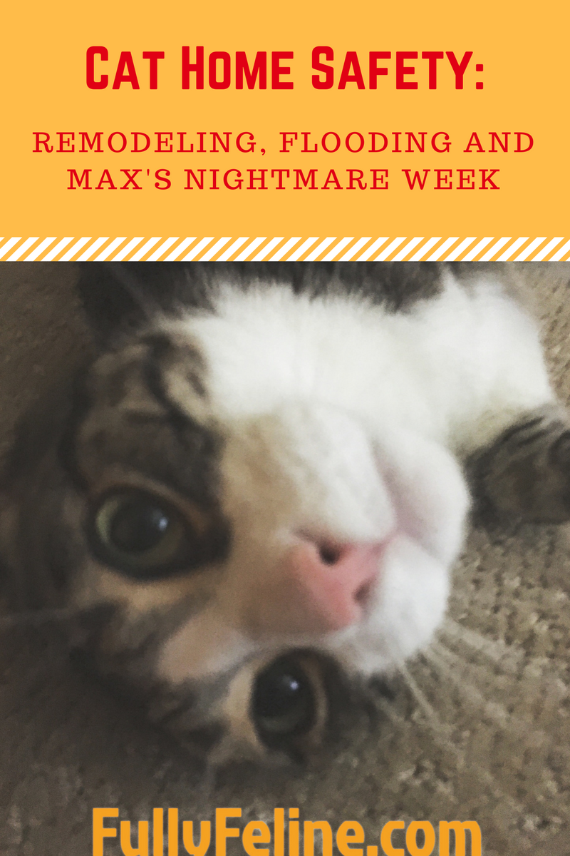 Cat Home Safety Remodeling Flooding And Max S Nightmare Week Fully Feline Home Safety Cat House Home Protection