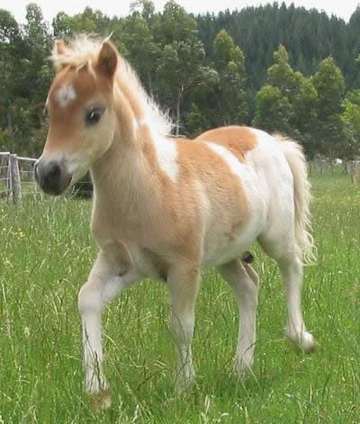 Cute Minature Pony Wish I Could Have One Future