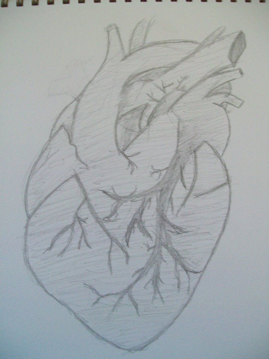 Real sketched drawings human heart sketch by sushininjas on deviantart pencil sketch drawing