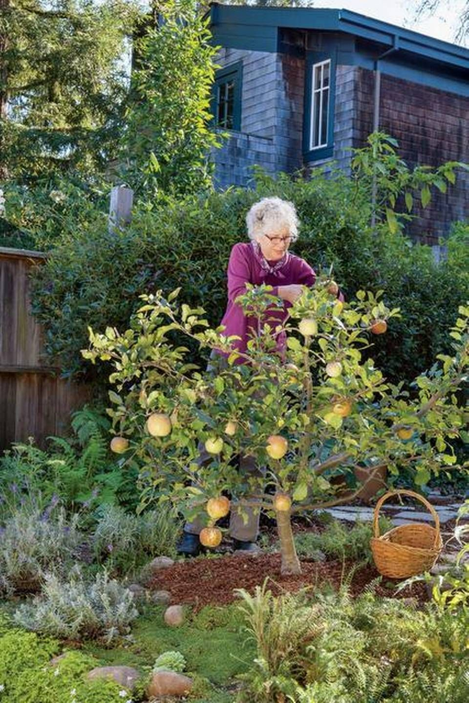 Dwarf trees allow backyard fruit for the home gardener ...