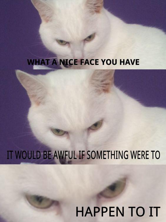75 Funny White Cat Meme White Cat Meme Etandoz White Cat Meme Cat Memes Funny Cats