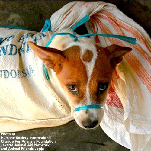 End Indonesia's Dog Meat Trade We need your help in
