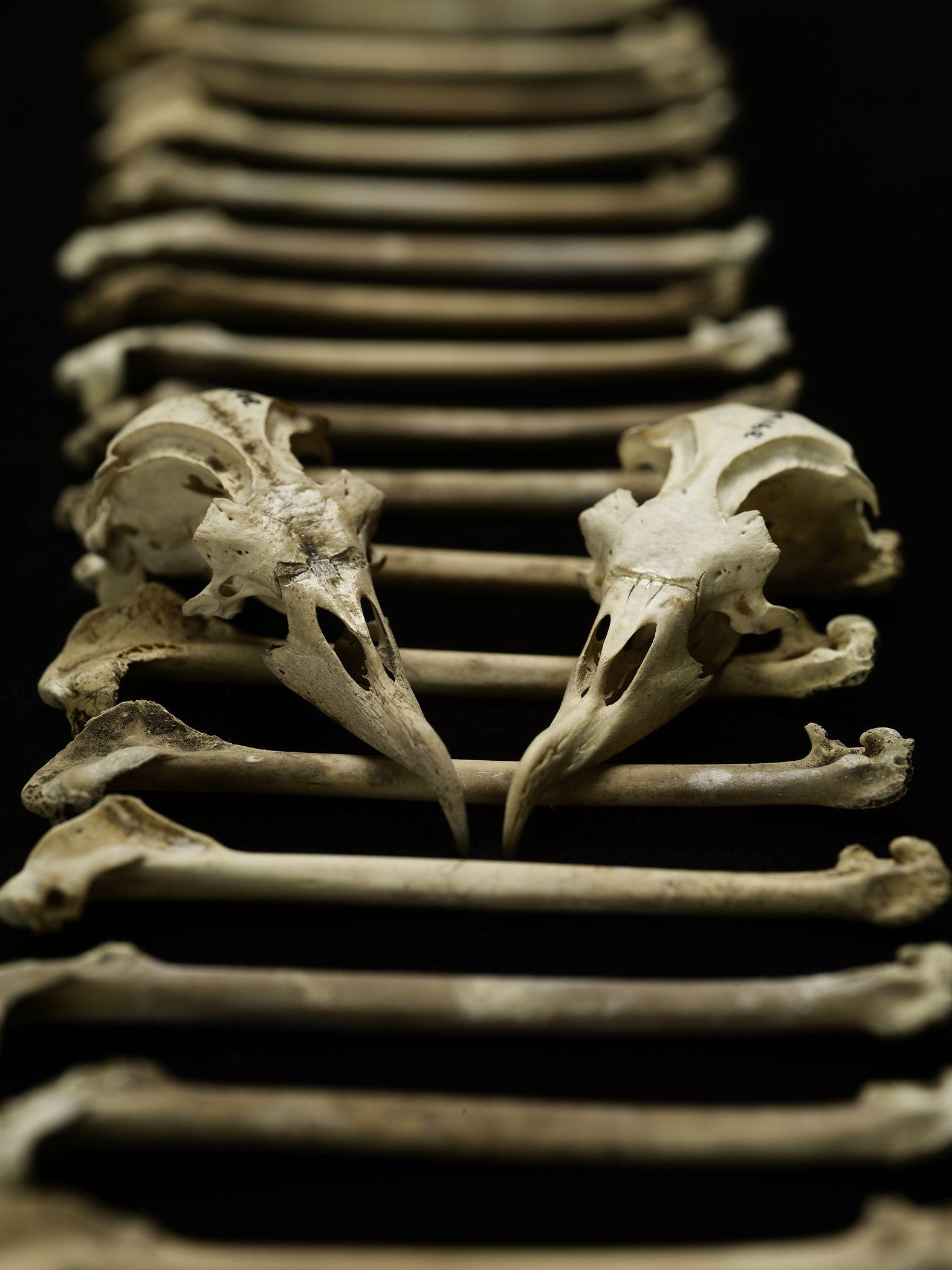 Bird Bones Reveal Human Effects On Ocean Food Chain