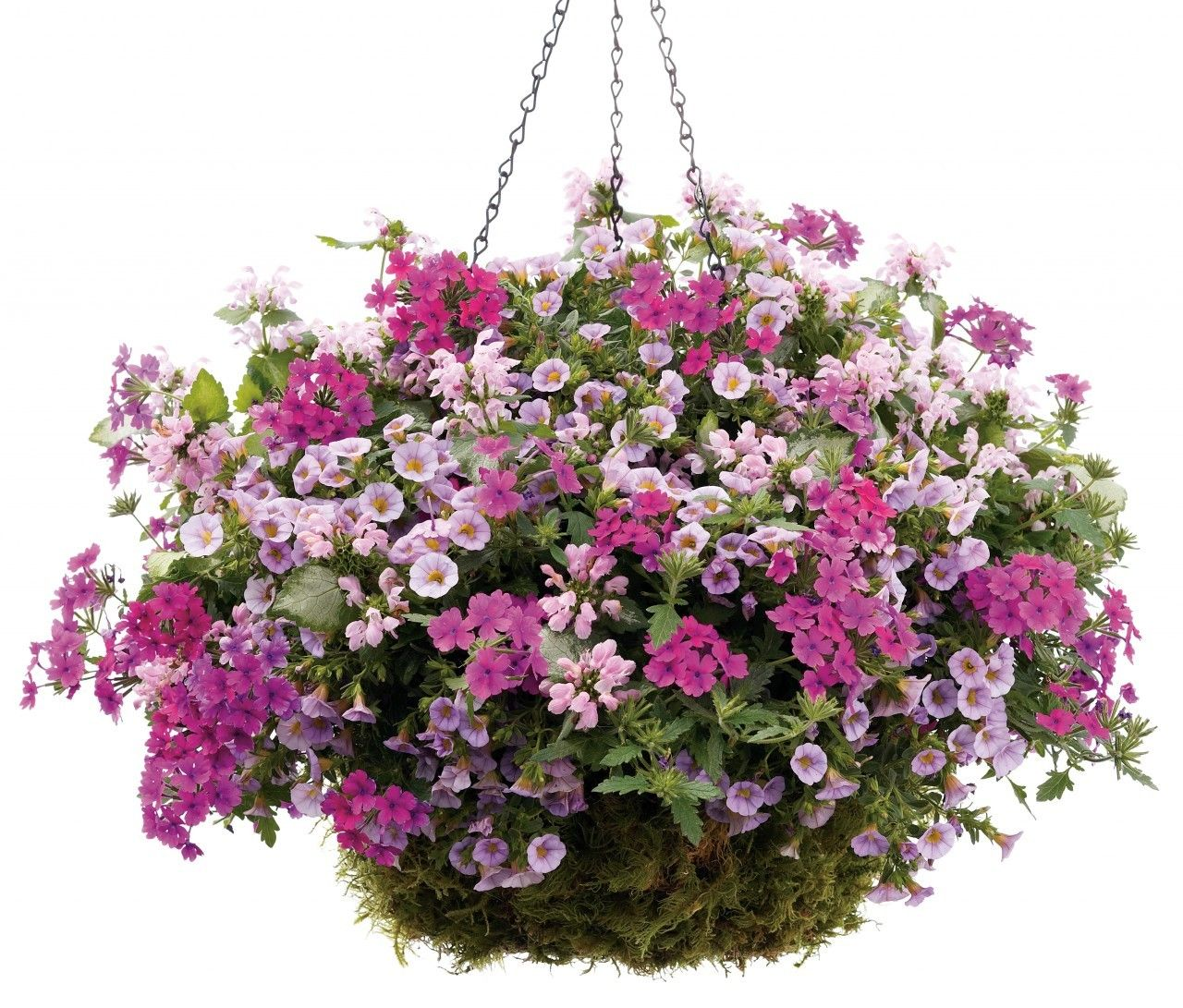 Proven winner 16 hanging basket 6001 ray hunter for How to hang flowers