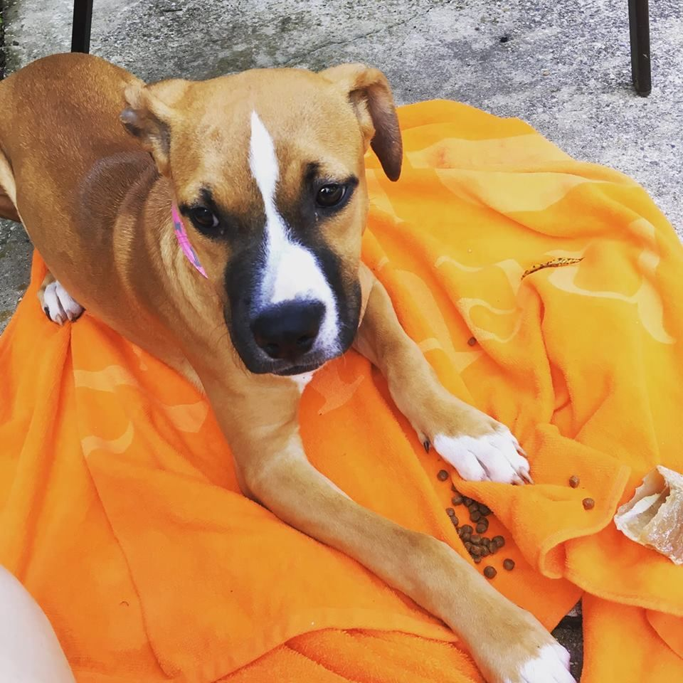 Lost Dog Female West Allis Wi Usa 53227 Losing A Dog Dogs Dog Mixes