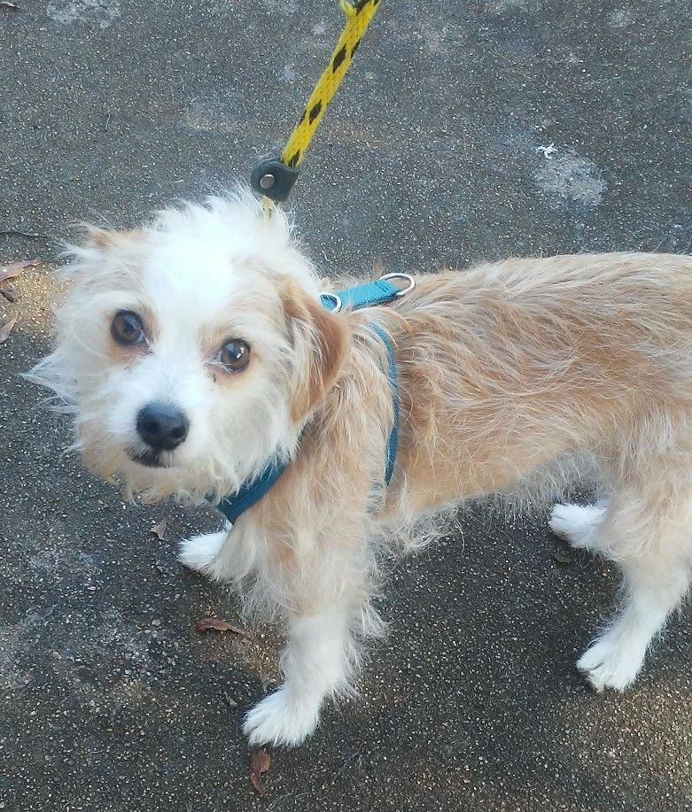 Adopt Charlie on Rescue dogs, Terrier mix dogs, Dogs