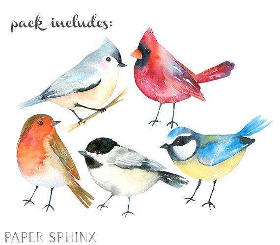 Aquarell Vögel Clipart | Winter Vögel Clipart – Waldtiere – Robin, Kardinal Singvögel – Scrapbooking Natur Kunst – Digital Instant D   – Aquarelle