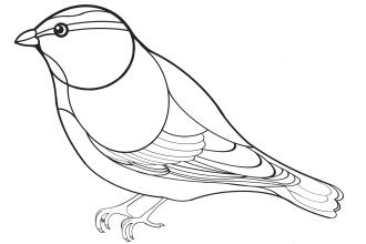 Blaumeise Malvorlage Blaumeise Vogel Malvorlagen Ausmalen