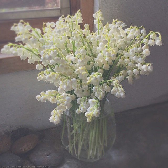 Michaela Medina Harlow On Instagram Smells Like Home Lily Of The Valley Garden Plants Flowers