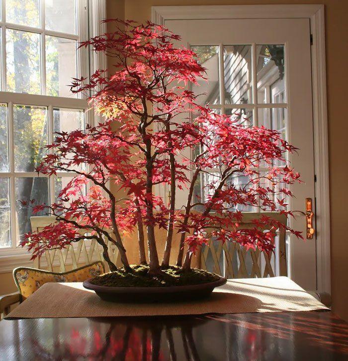 15 Of The Most Beautiful Bonsai Trees Ever Bonsai Baum Bonsai