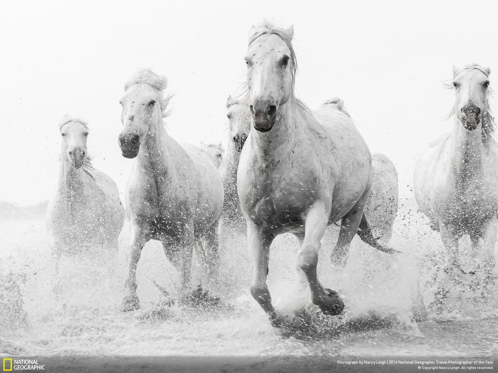 Wonderful Wallpaper Horse National Geographic - 533e57cac112a7217c3f59b3a0ac0c1f  Best Photo Reference_355749.jpg
