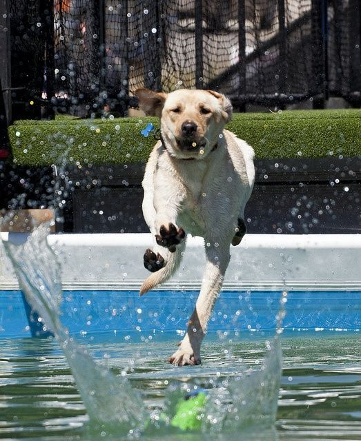 Dock Diving Dogs Water Dogs Dogs Cute Dogs Training Your Dog