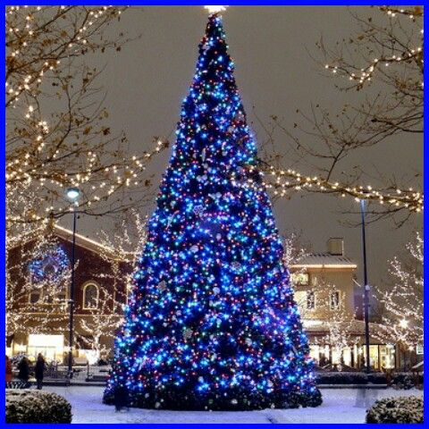 A very large Christmas tree stands so tall!! Mainly covered in dark blue Christmas  lights. Clear lights light up in the background. Stunning!!! - A Very Large Christmas Tree Stands So Tall!! Mainly Covered In Dark