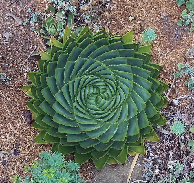 25 Stunning Photographs Of Sacred Geometry And Fractals In Nature