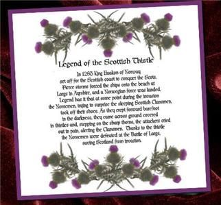 Image result for thistle meaning | Scottish heritage ...