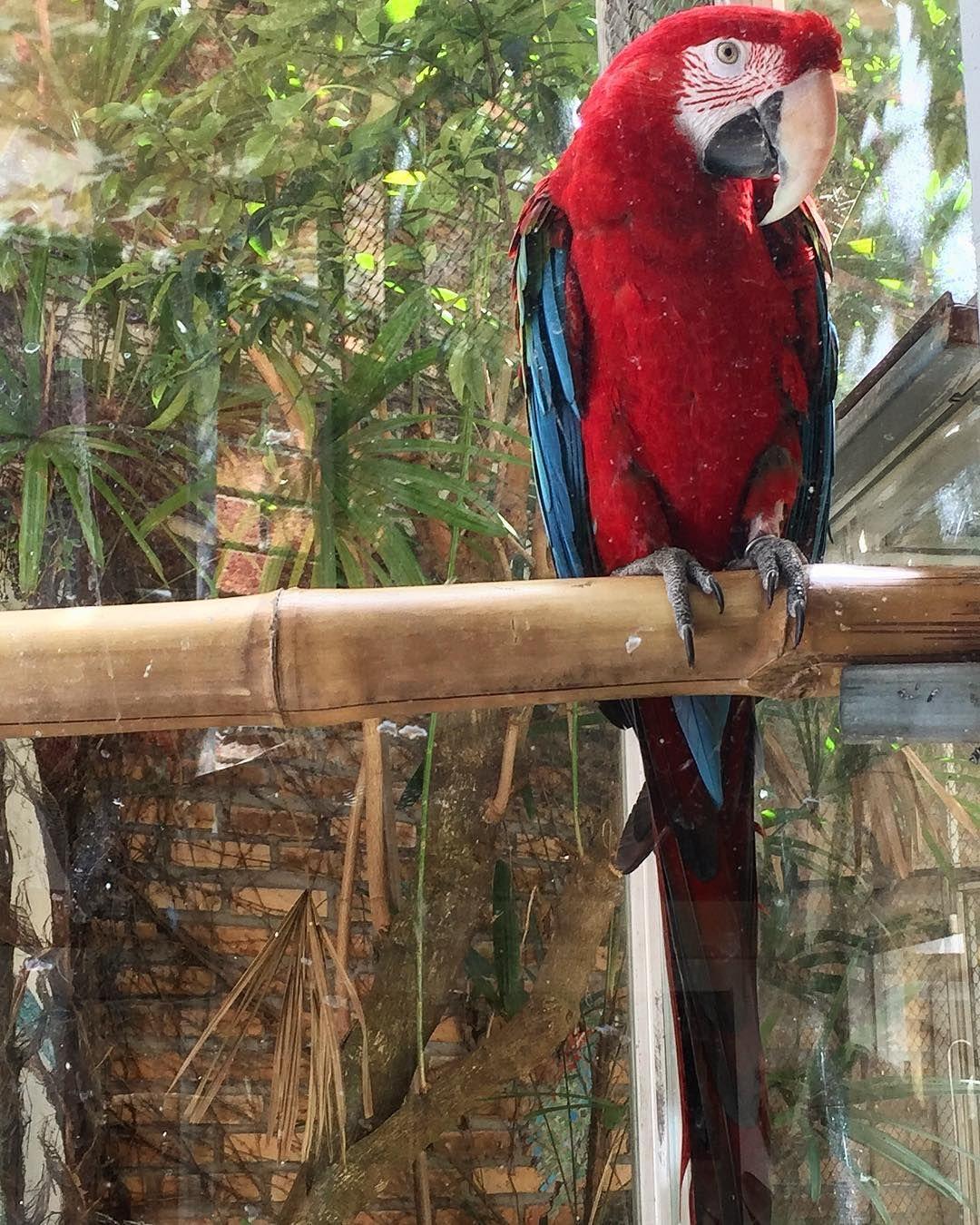 Wing Animal Jungle Zoo Parro T Bird Toucan Animal Life