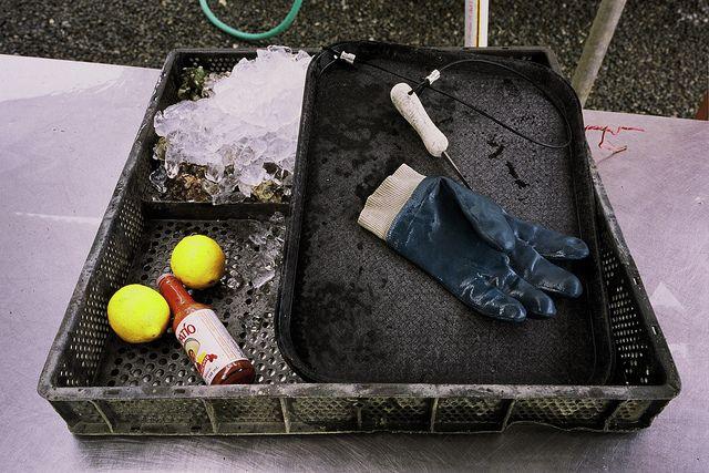 Hog Island Oysters • Tomales Bay, California V by MatthewChamberlain, via Flickr