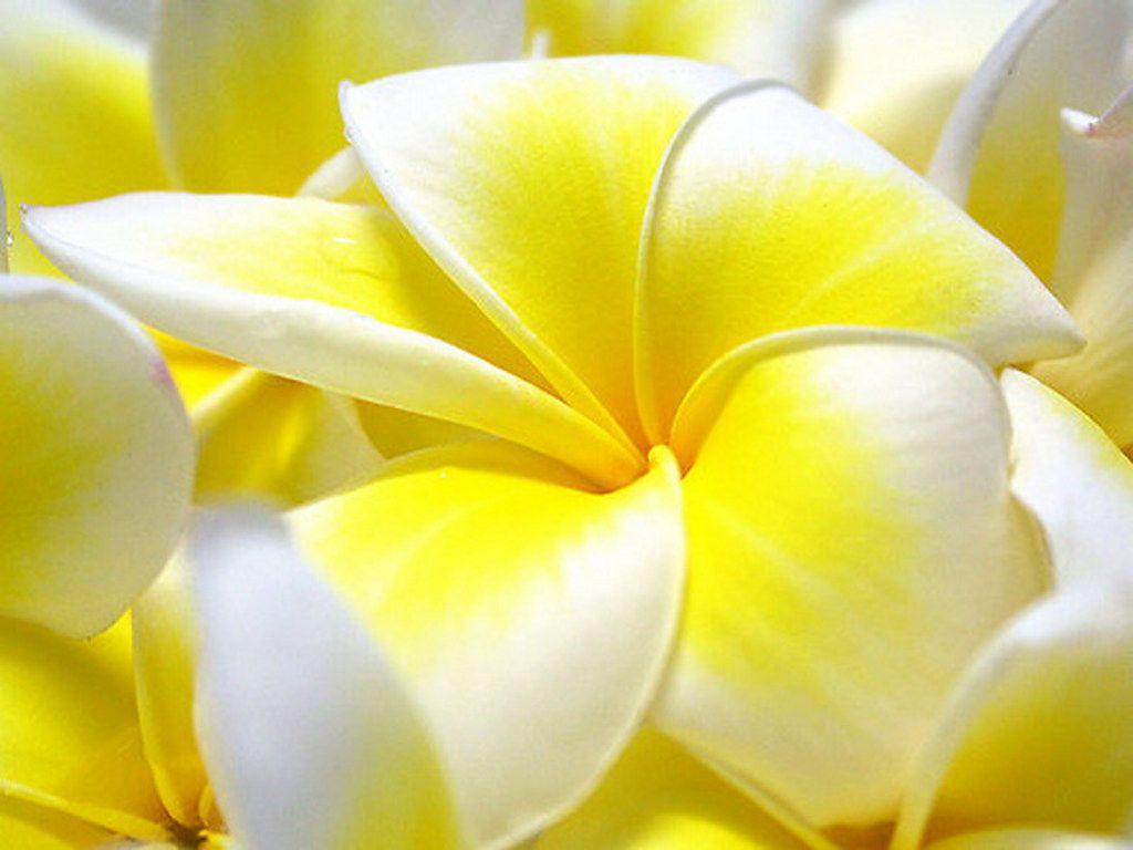 Permalink to Flower Wallpaper Desktop Full Size
