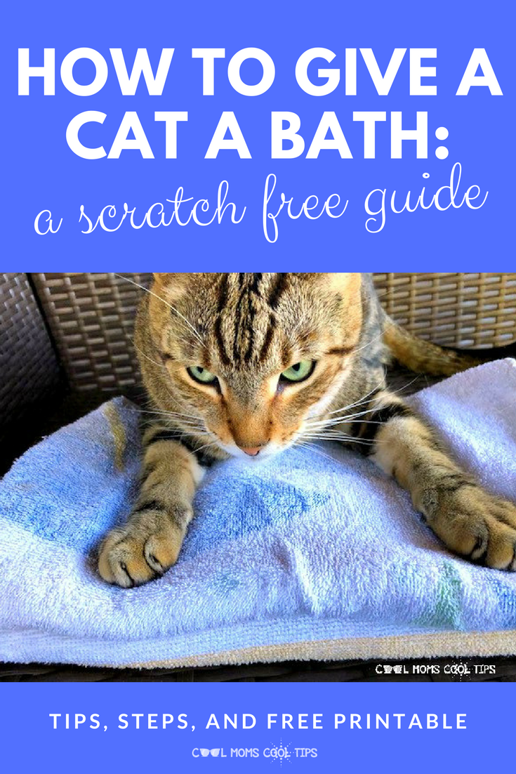 How To Bathe A Cat And Survive Process And Supply List Printable Cool Moms Cool Tips Cats Pet Care Cats Cat Bath