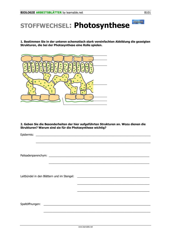 Photosynthese Beteiligte Strukturen – Unterrichtsmaterial im Fach ...