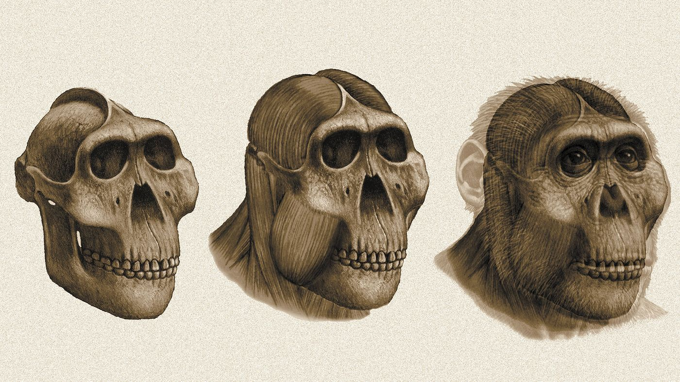 Dental detectives what fossil teeth reveal about
