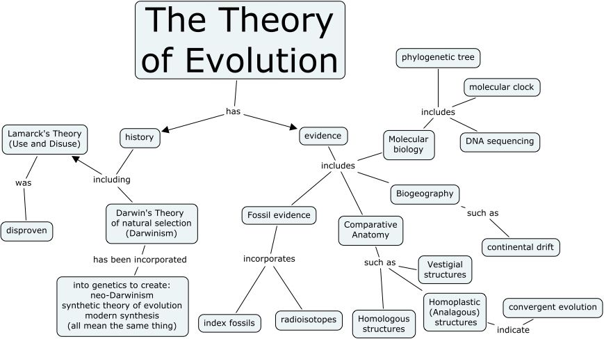 Theory Of Evolution Theory Of Evolution Darwin S Theory Of