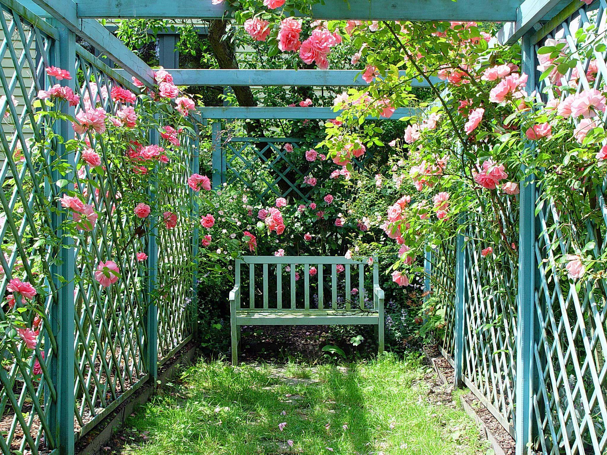 bench in trellis rose corner. | Homes & Gardens ...