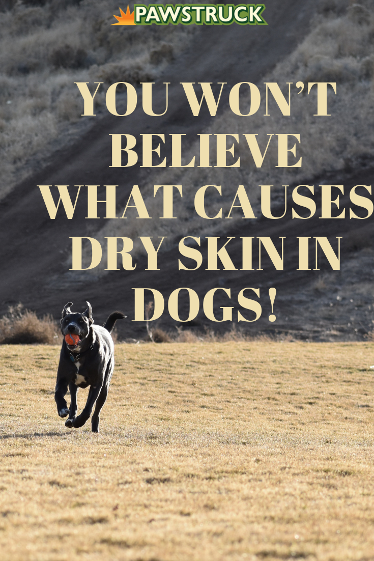 You Wont Believe What Causes Dry Skin In Dogs Pets Dogs Dog