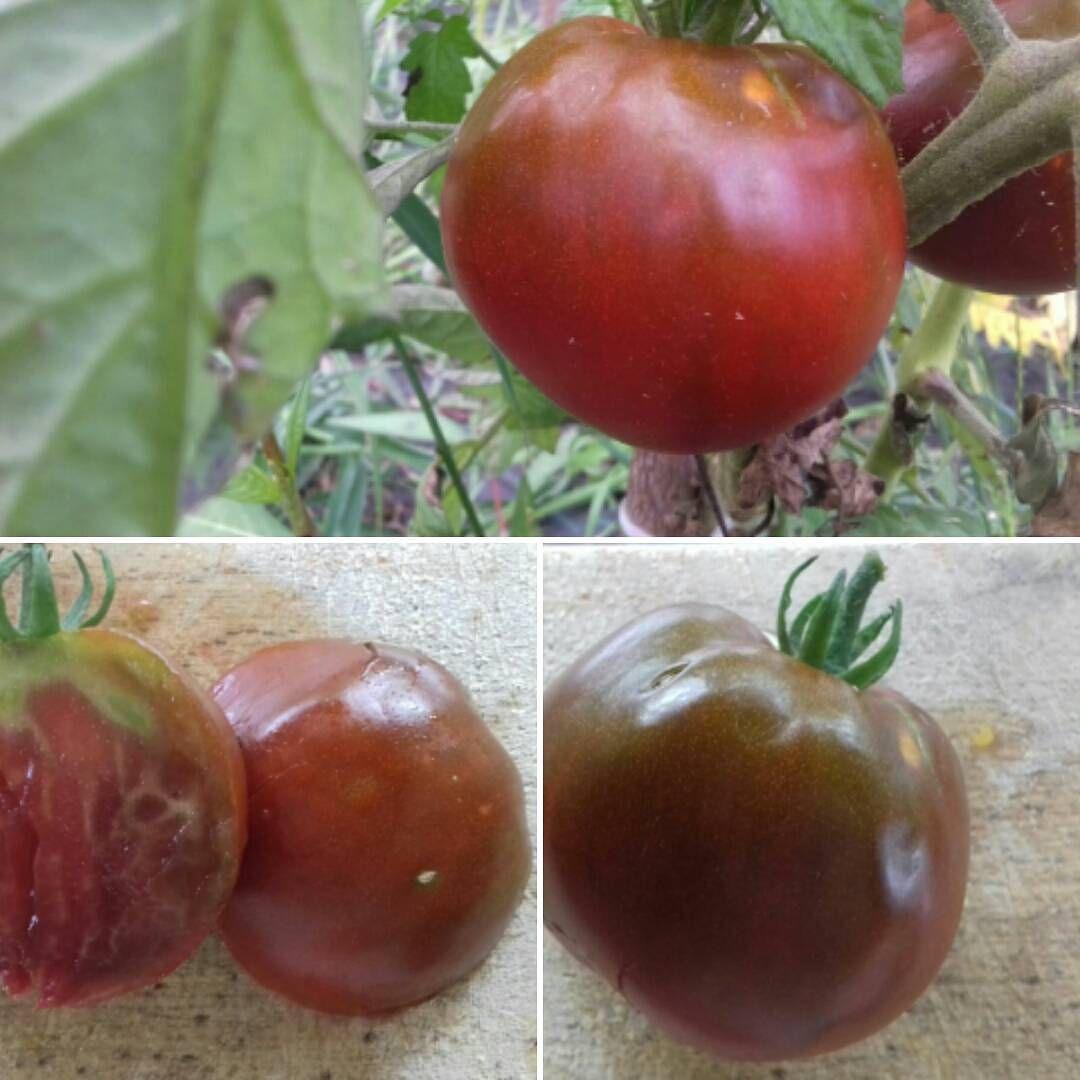 Pomodoro Black Prince Varieta Antiche Pomodori Orto Instagram