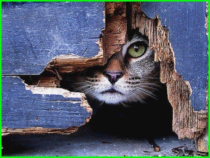 Myke ⁓ Top Ten Kode Alam Kucing Ketabrak