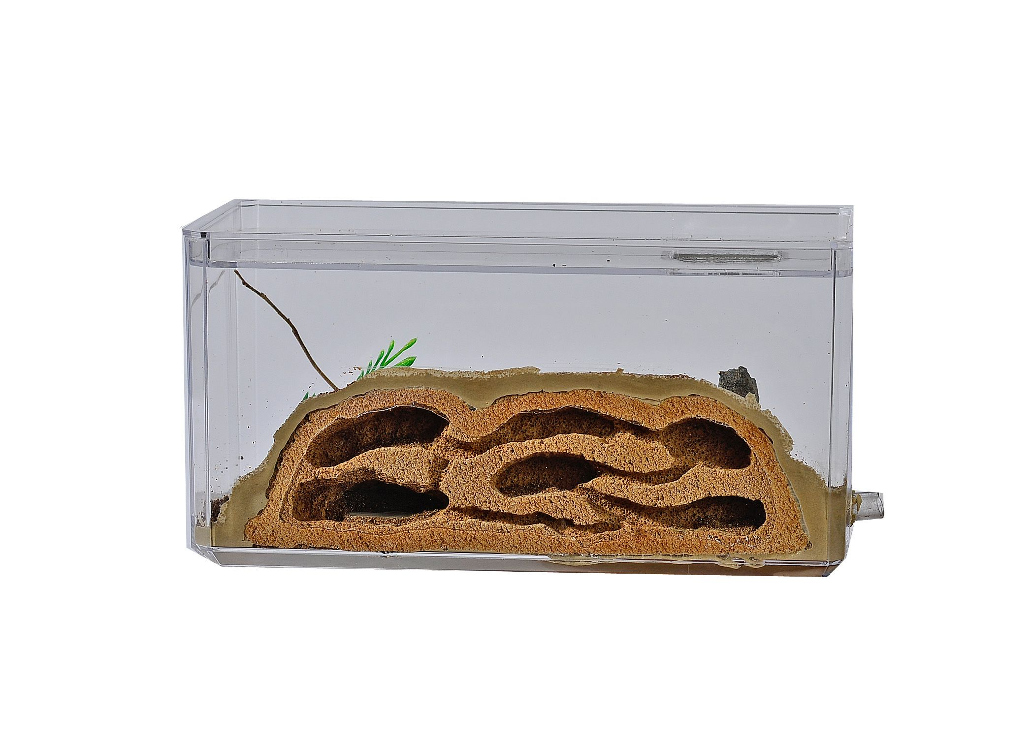 Tarheelants Formicarium Bugs Pinterest # Faire Support Aquarium Beton Cellulaire