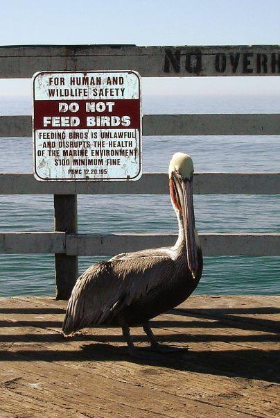 Just Don T Marine Environment Pelican Marine