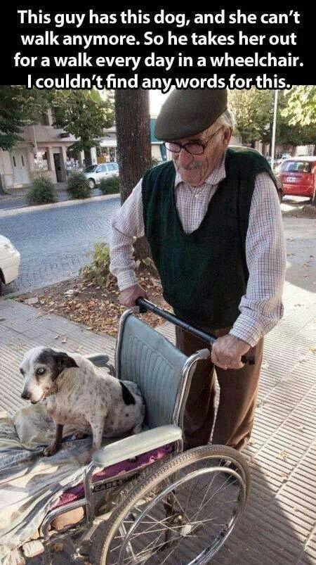 Súper tierno, y más fotos de adultos mayores con sus perros