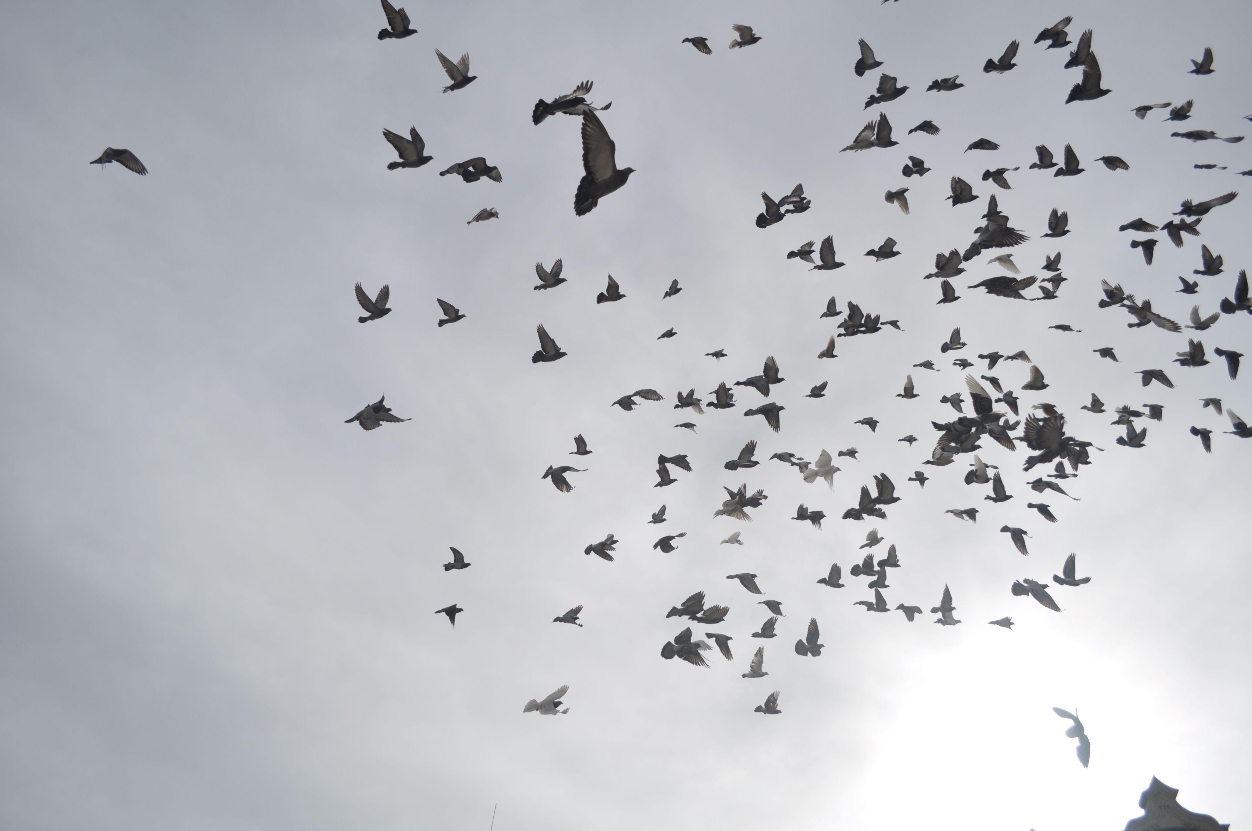 Birds - Tomar, Portugal
