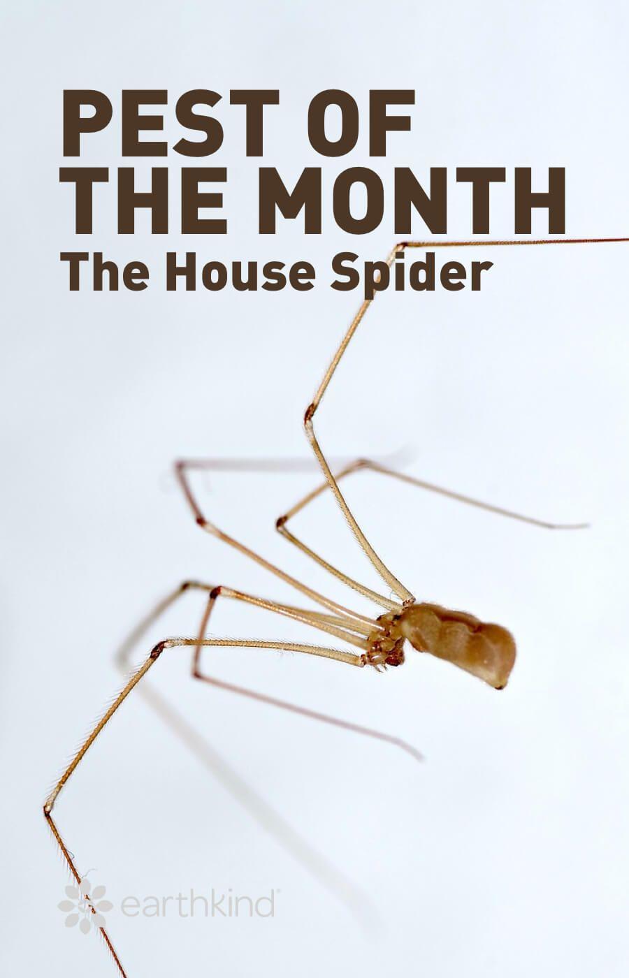 534509b00a3c1b3fca01830434e7e004 - How To Get Rid Of A Spider Infestation Outside