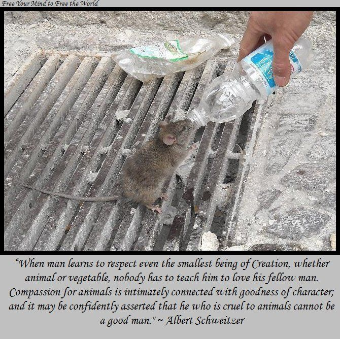 Compassion for animals is intimately connected with goodness if character!