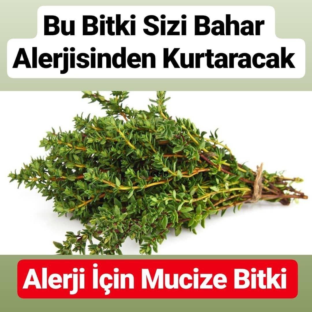 Alerjiye Mucize Bitki Herbalism Herbs Just Do It