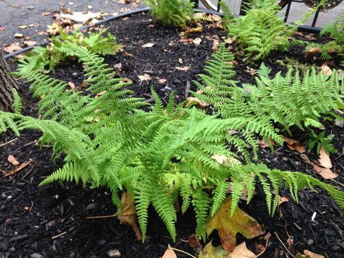 Astral Gardens - Landscaping and Garden Design Services