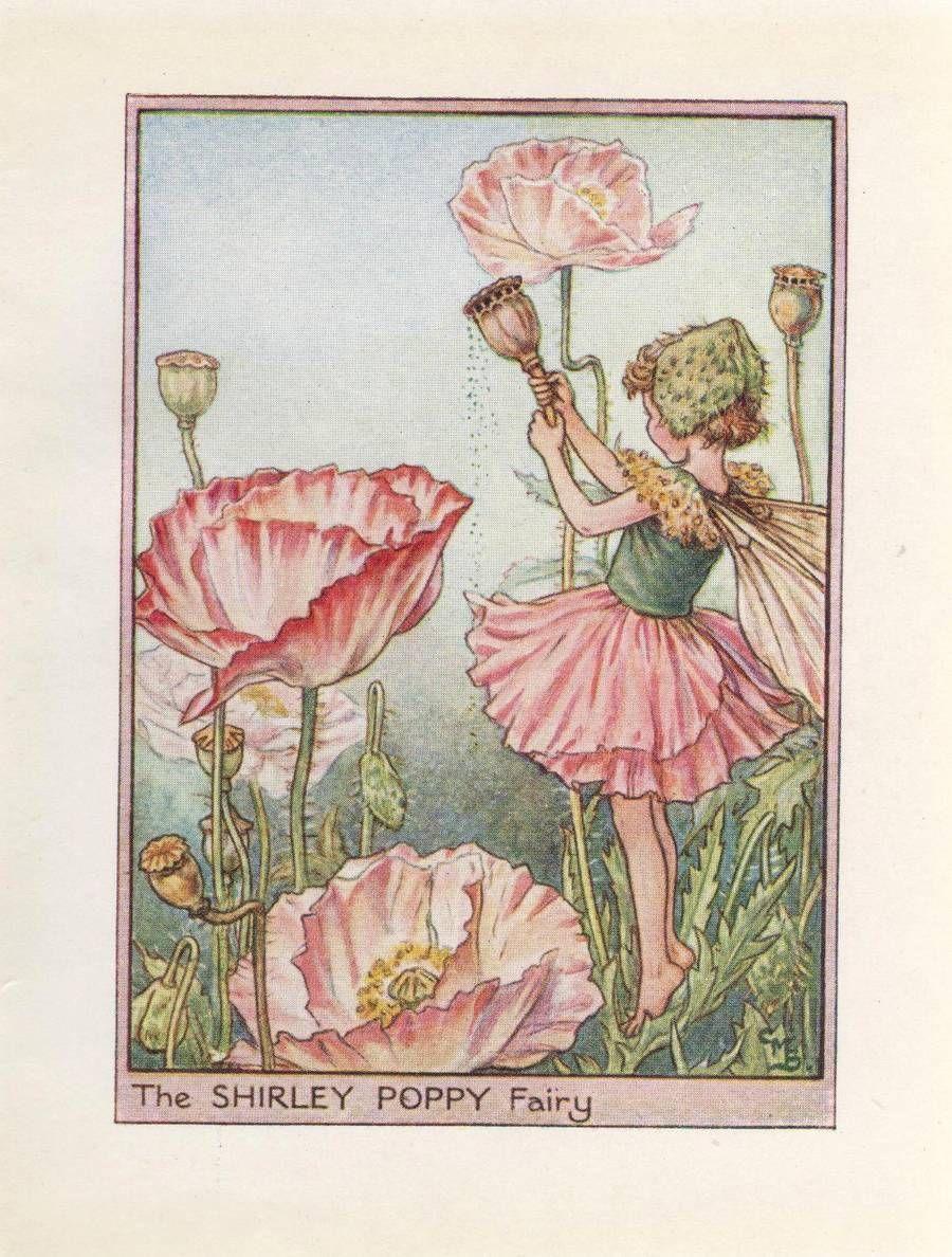 Flower Fairies The Shirley Poppy Fairy Vintage Print C 1930 Cicely