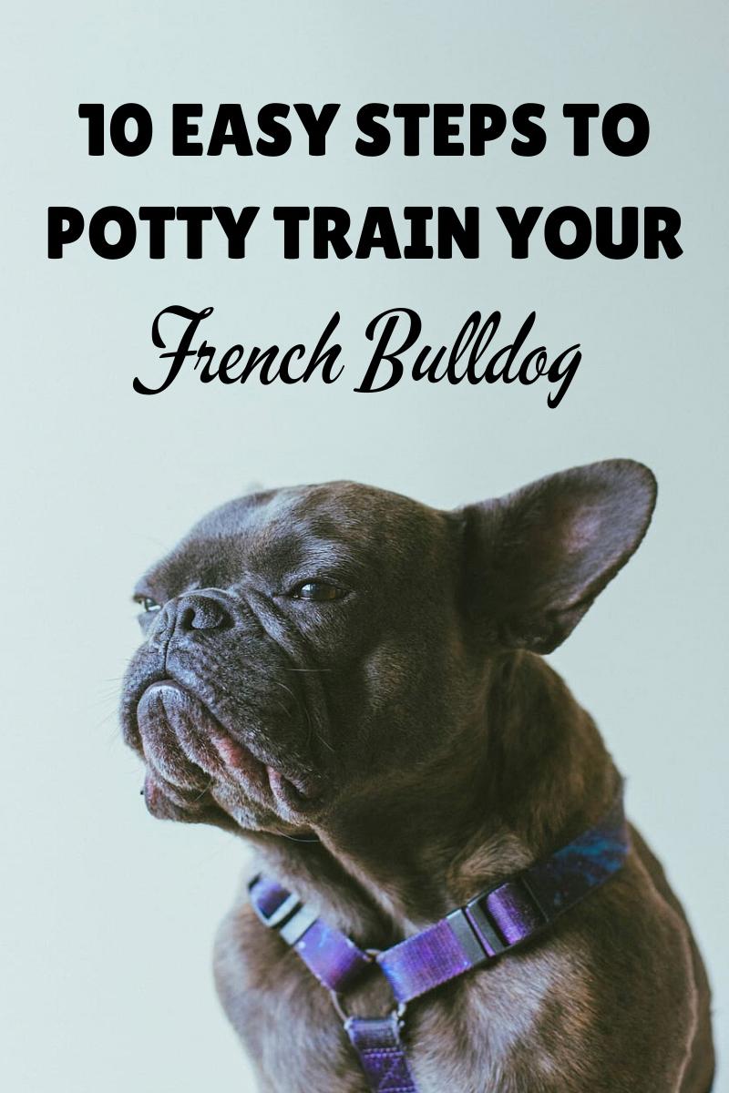 New Dog Training Course ♡ in 2020 French bulldog, Grey