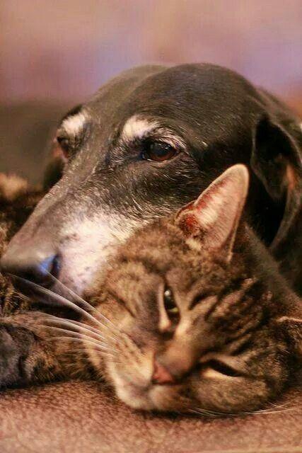 Verdadera amistad a pesar de sus diferencias.