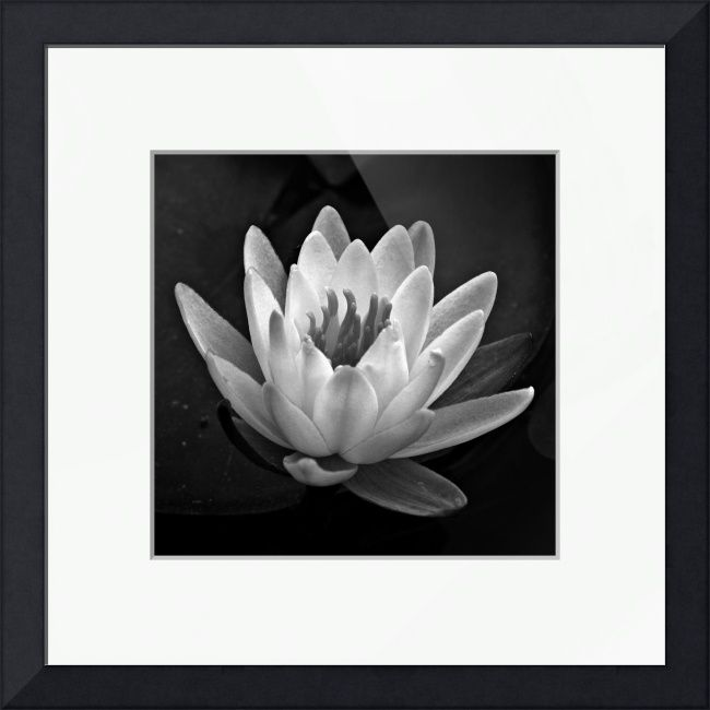 Water Lily In Black And White Ll By Jim Bavosi Fine Art Prints Photography For Sale Art