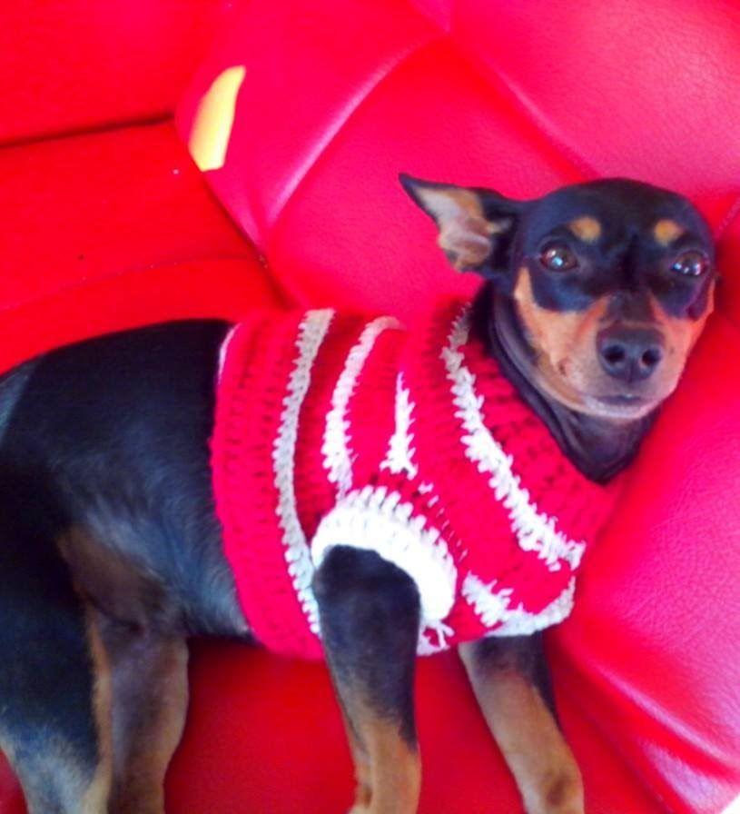 Sueter para Perro en Crochet | crochet dogs | Pinterest | Suéteres ...