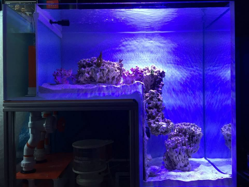 Primo reef acrylics new 40 48in glass drop off aquarium for Acrylic vs glass fish tank